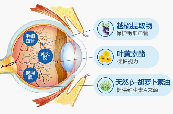 秋季需补充这些营养护眼,叶黄素什么牌子好也需了解