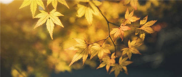 防秋燥,先润肺,秋季养肺可服仲景麦味地黄丸